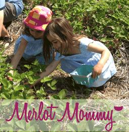 summer strawberry picking