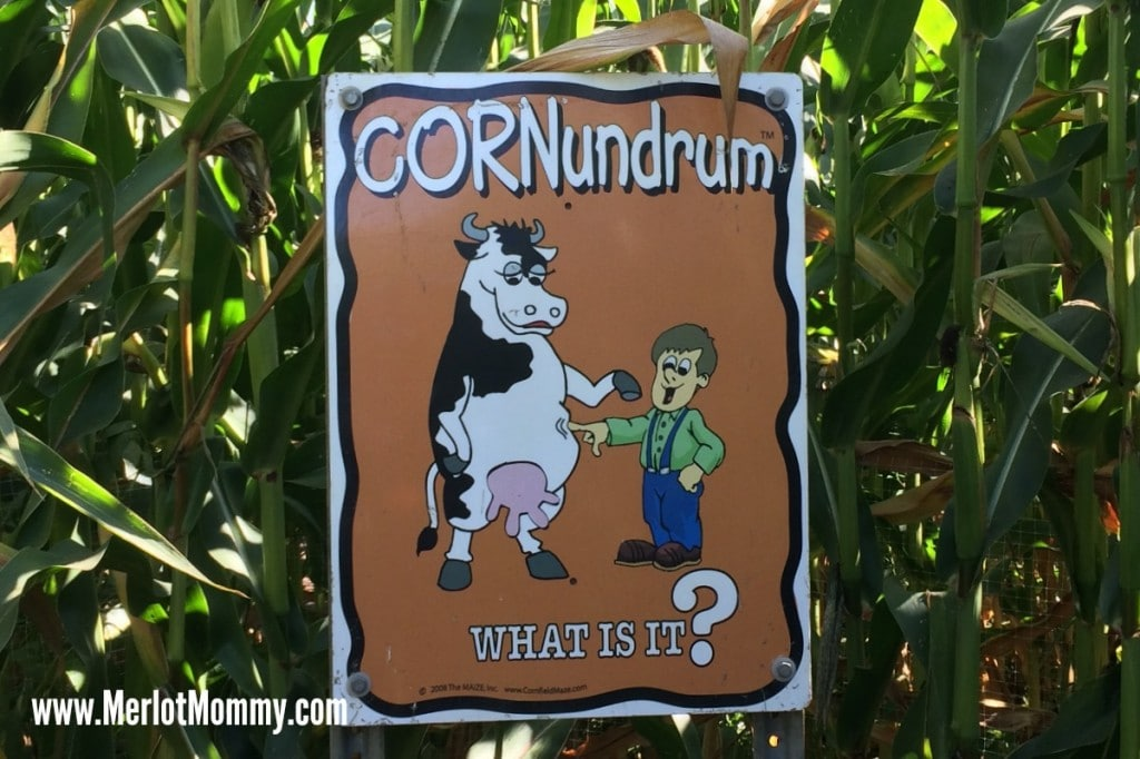 The MAiZE at the Pumpkin Patch {Review} #PDX #OR Portland