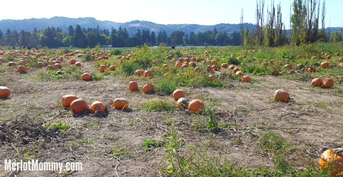 Pumpkin Patches and Corn Mazes (by State)