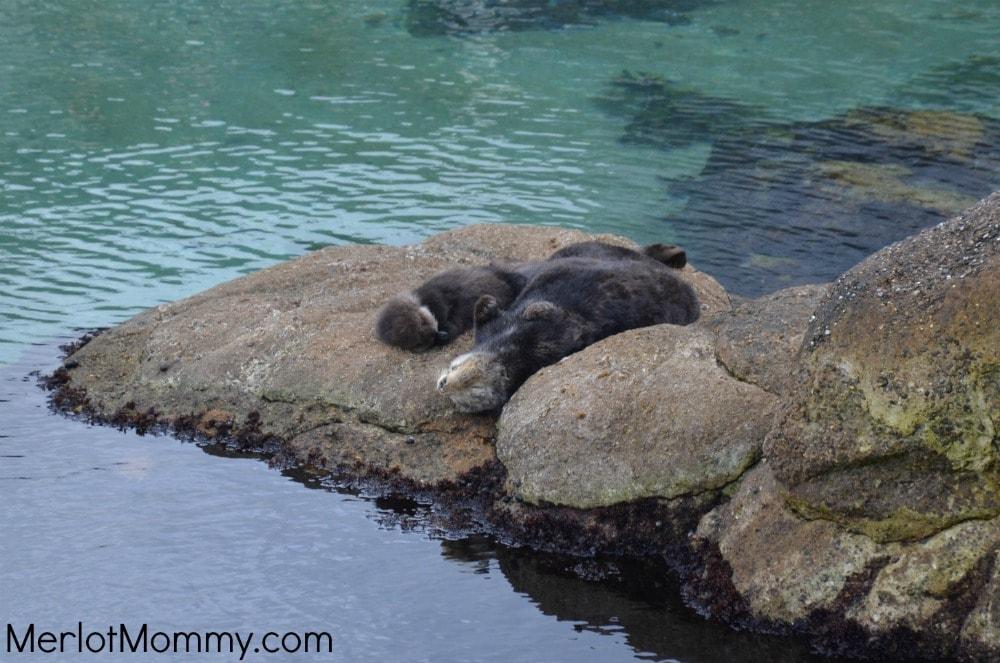 Monterey-Bay-Aquarium1