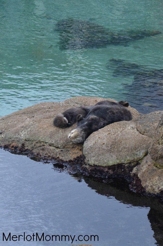 Monterey-Bay-Aquarium2