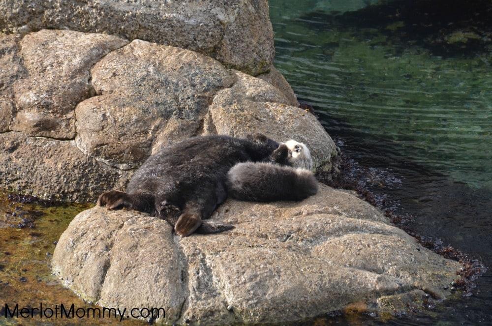 Monterey-Bay-Aquarium3