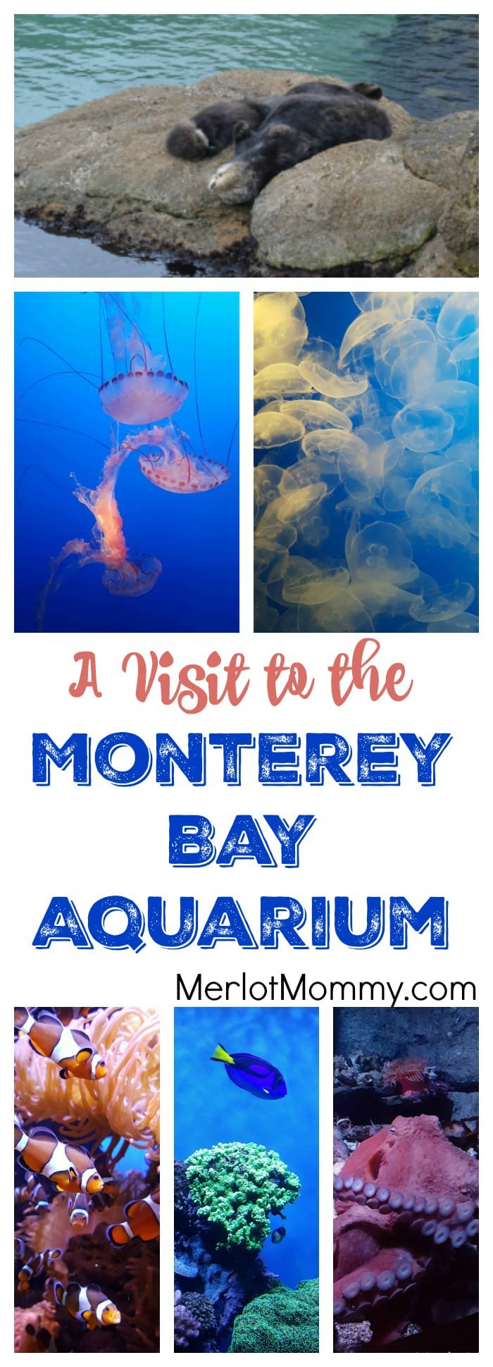 A Visit to the Monterey Bay Aquarium for Finding Dory