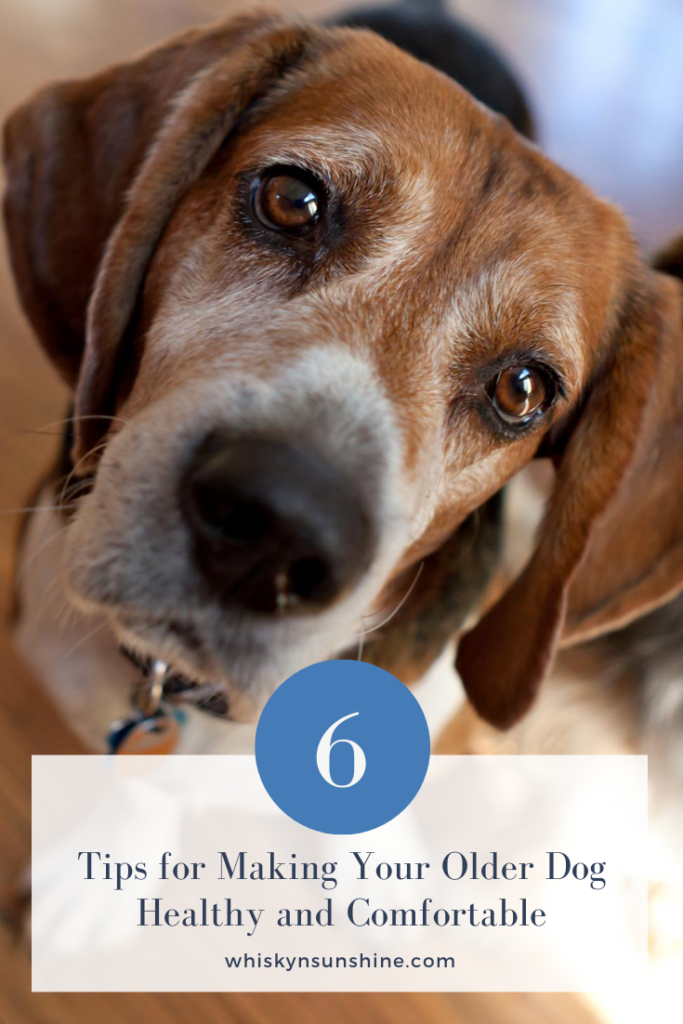 6 Tips for Making Your Older Dog Healthy and Comfortable