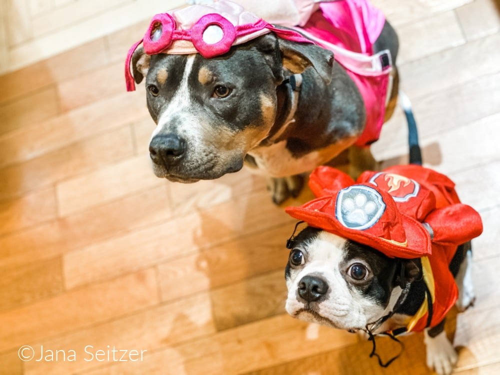 Val and Six Paw Patrol Costumes