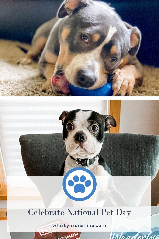 Celebrate National Pet Day
